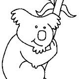 koala2-1.jpg