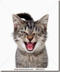 stock-photo-cute-tabby-cat-crying-with-one-eye-closed-on-white-background-68610007