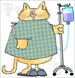 Sick-Cat-525688