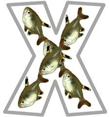 Xx xray fish