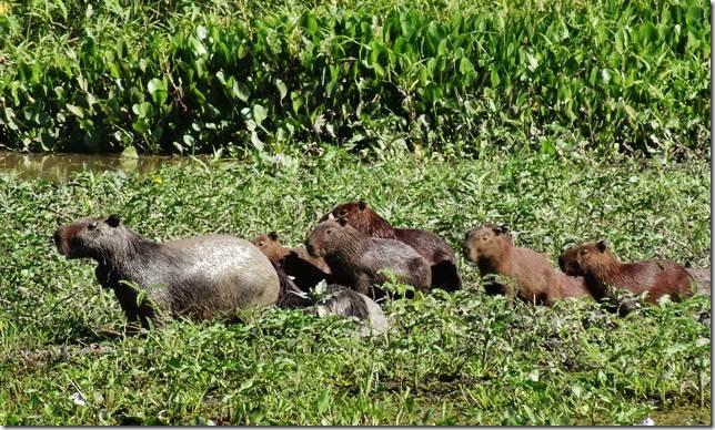 Pantanal_DSC08614