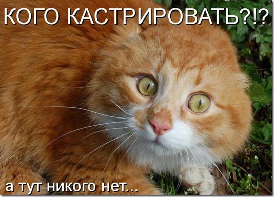 kotomпatrix_02