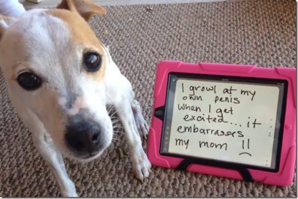 dogs-dirty-secrets-13