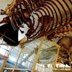 Boston - Harvard Natural History Museum