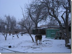 Bokonbaev_snow2