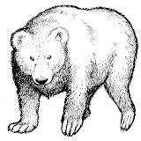 oso-1.jpg