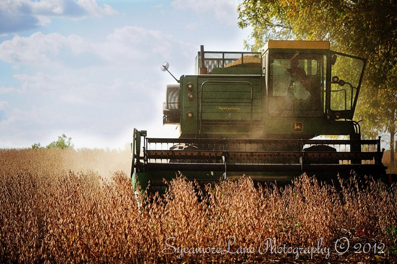 harvest 2012-1-hd