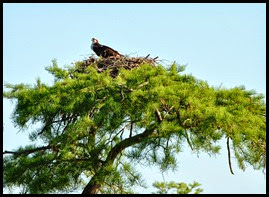 07 - First Osprey Nest - paddled up close