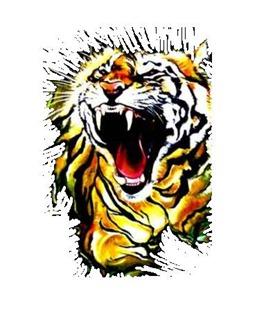 tigre-de-bengala2