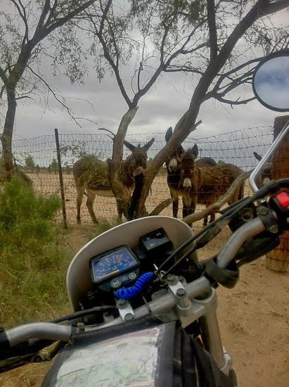 Yamaha XT225 meets burros