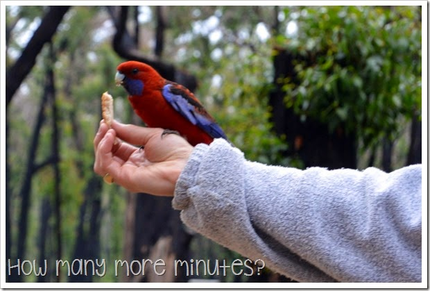 How Many More Minutes? ~ Sawpit Camping Area