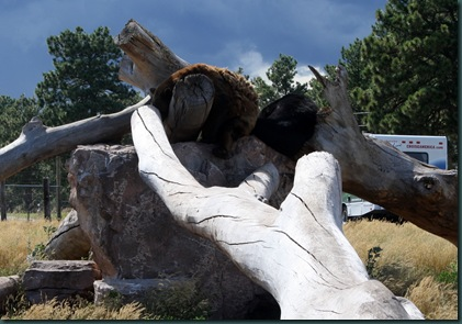 Mt Rushmore and Bear Country 106