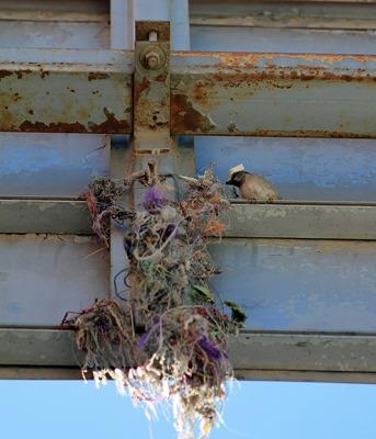 Mexico Birds 20132