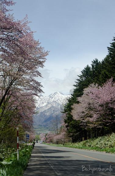 2013-05-25 Sakura 035