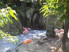 2009.05.16-046 flamants roses