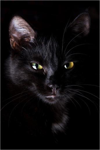 4425black_cat