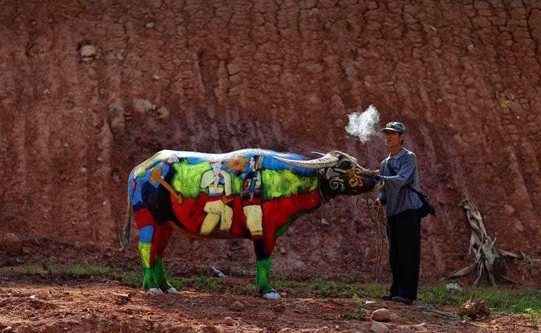 buffalo-bodypainting-9
