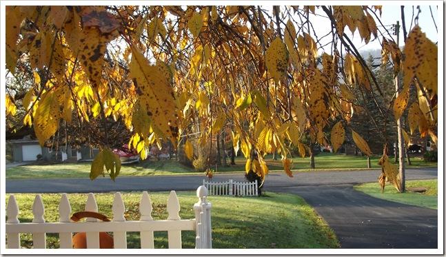 autumn day 10.26.12 015
