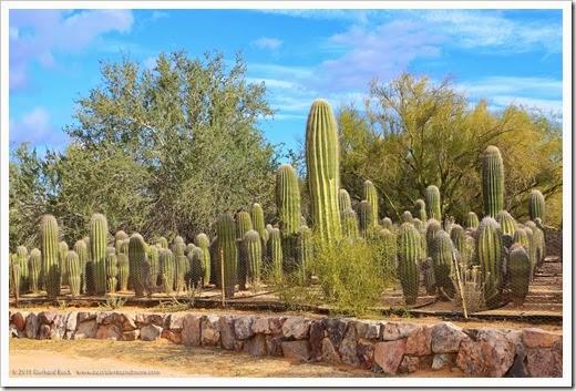 141231_Tucson_Bachs_0039