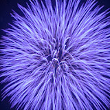 Epic Fireworks - Huge Blue Chrysanthemum Burst - http://www.epicfireworks.com/