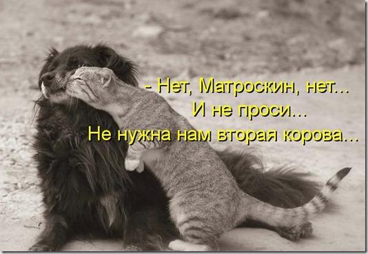 kotomatritsa_63