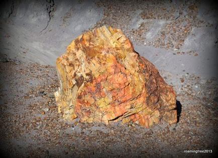 Petrified Log