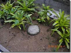 dikelilingi oleh pot tanaman