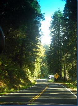 Redwoods (5)