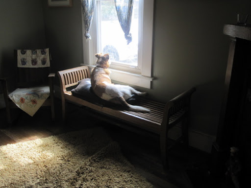 But sometimes just relaxing in a sunny window and taking in the sights is all a pooch really wants!