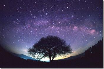 Céu roxo e estrelado (LINDO)