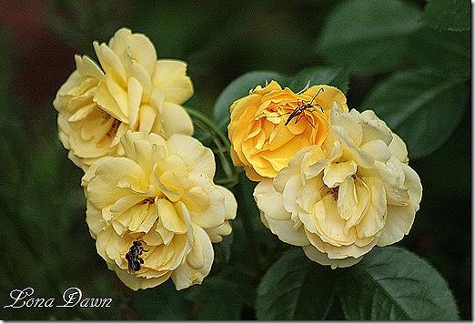 Rose_JuliaChild_Bugs