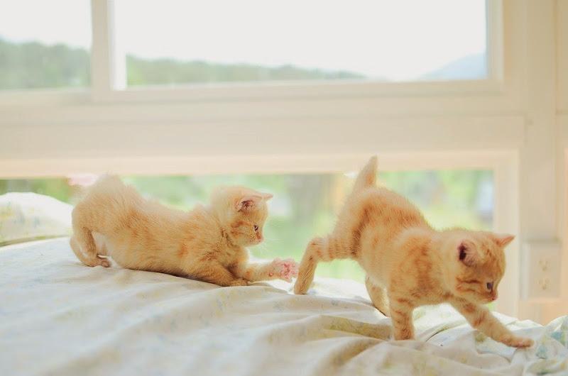 may kittens-19444