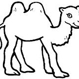 camello1.jpg