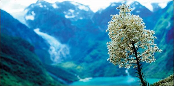 طبيعة وصور من النرويج