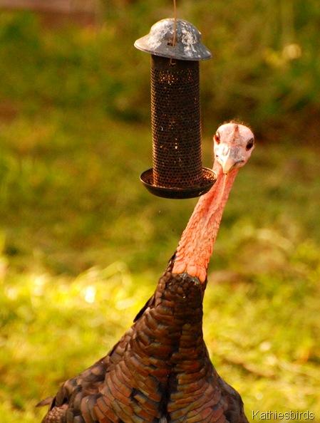6. Turkey-kab