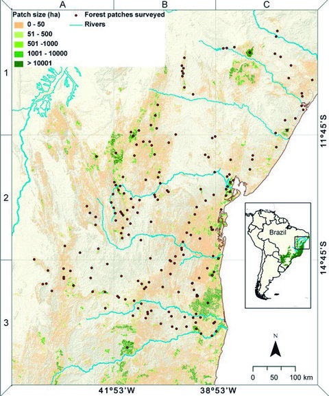 Distribution of remaining forest patches across Brazil's northern Atlantic Forest study region, showing all surveyed forest patches. These patches show unprecedented rates of local extinctions of medium to large-bodied mammals in one of the world's most important tropical biodiversity hotspots. Canale, et al., 2012