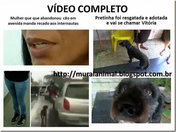 cao_abandonado_avenida