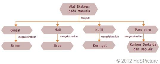 peta konsep sistem ekskresi pada manusia