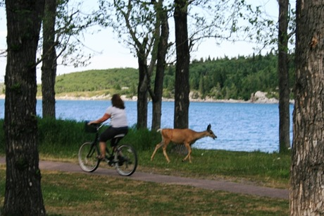 Deer by lake 2