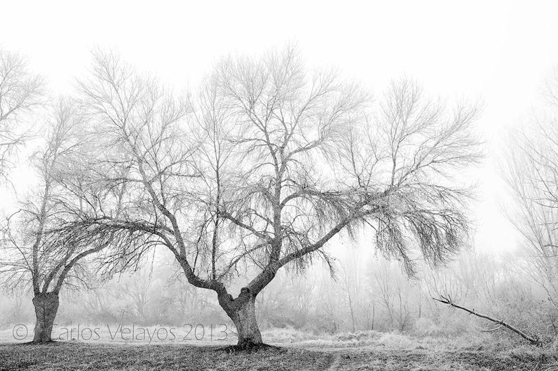 Niebla y Escarcha -1-