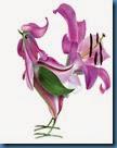chim hoa