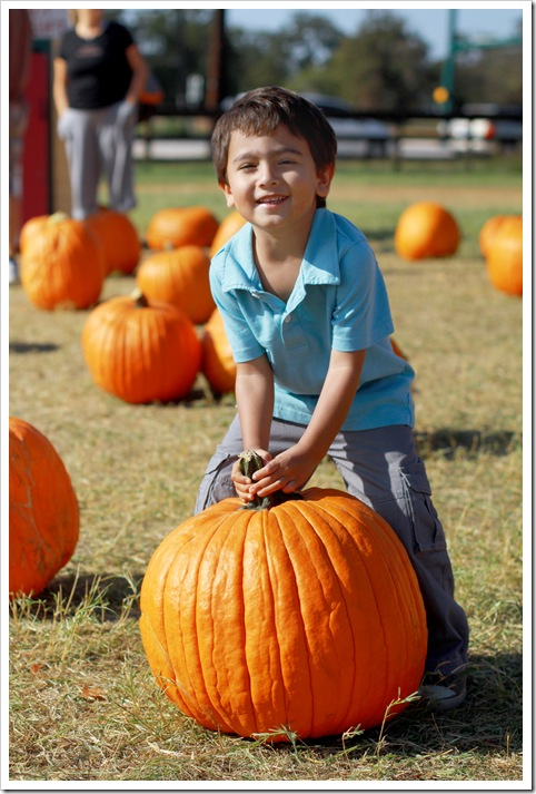 pumpkin patch IMG_9935