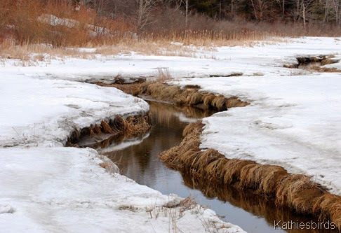 6. frozen marsh-kab