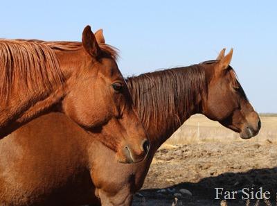 Shirleys Horses