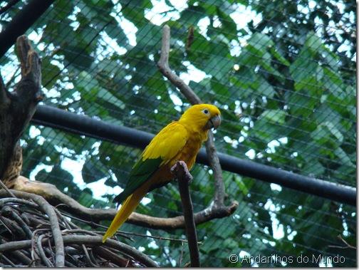Ararajuba Parque das Aves Foz do Iguaçu BlogTurFoz