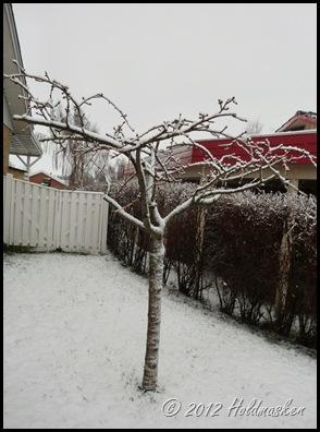sne 003