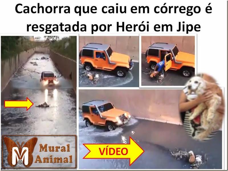 cachorra-resgatada-jipe