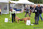20100513-Bullmastiff-Clubmatch_30861.jpg