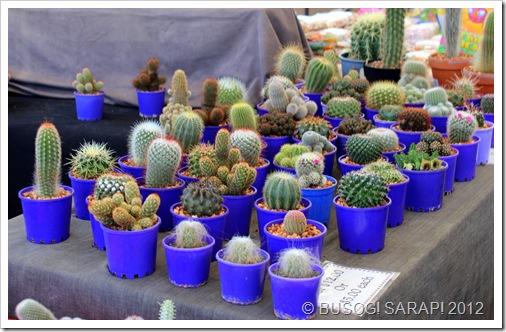 CACTUS PLANTS, ROCKLEA SUNDAY DISCOVERY MARKET© BUSOG! SARAP! 2012