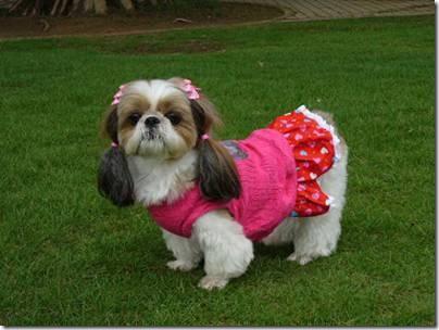 Animal cãoengraçado (9)